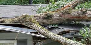 If you have a tree on your roof, call us for help.